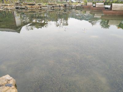 贺州园博园人工湖生态系统
