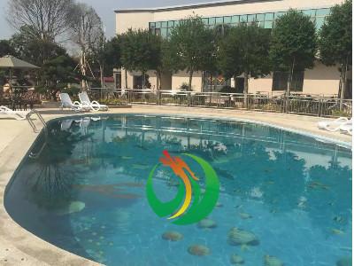北流市三宝花场游泳池